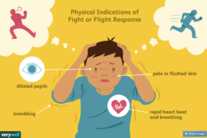 heart rate variability and fight or flight response